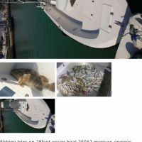 Fishing boat/rent