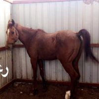 Horses for sell
