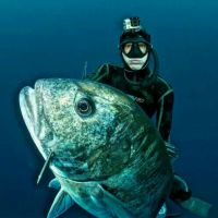 free dive spearing