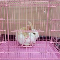For sale my rabbit