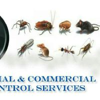 Thermal Tech Pest Control Service