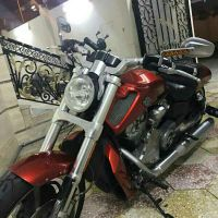 V-Rod muscle for sale