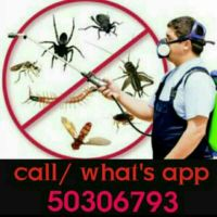 pest / bed bugs control 50306793
