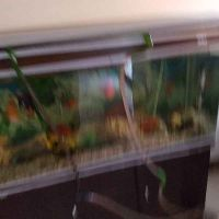 3 aquariums for sale
