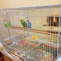birds with big cage with small house
