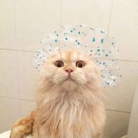 cat shower, claws trimmin & ear cleaning