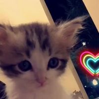 Cute cat for sell