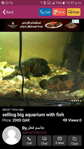 selling big aquarium with big fishes