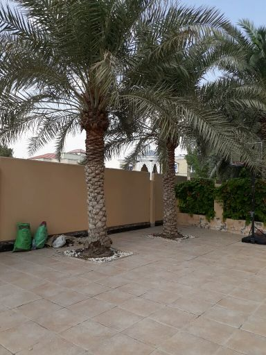 Removel of palm trees