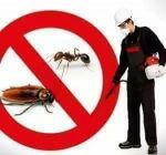 We have control insects