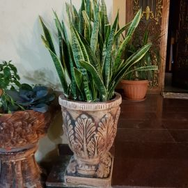 plant with cement pot