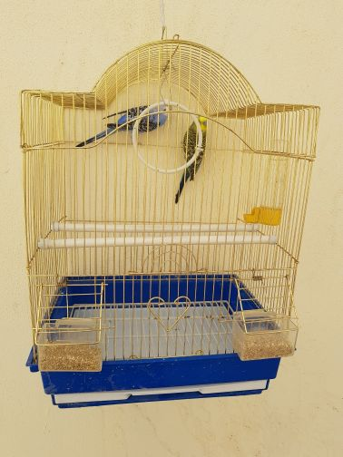 tow Birdsfor sale with cage