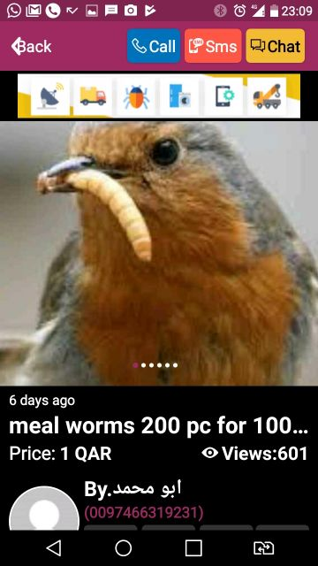mealworms live 2 for 1 qr