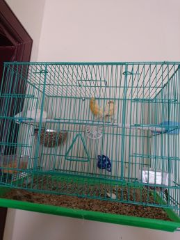 For sale my canary