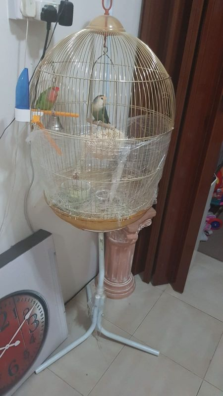 cage for urgent sale