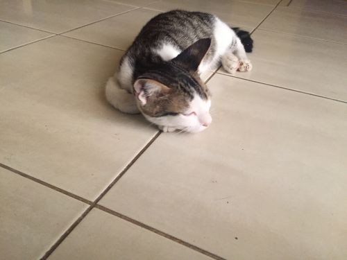 Cat for sell