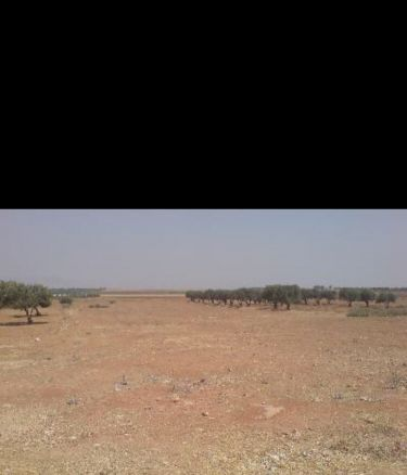 Land for leasing