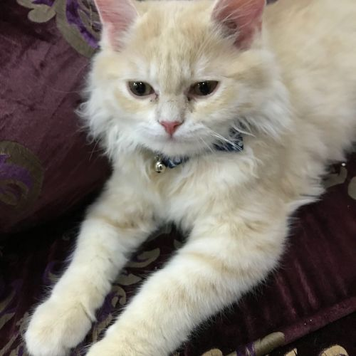 For sale 2 cat