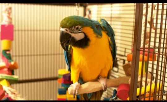 macaw .. friendly..health record..