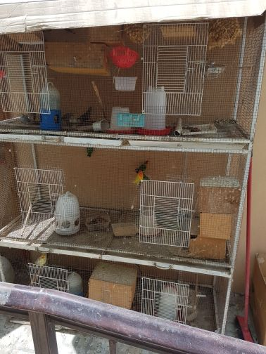all kinds of bird for sale in big cage
