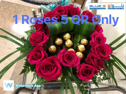 1roses 5 QR only
