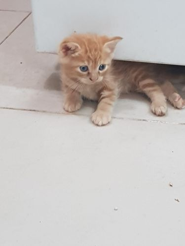 Five cats for sale