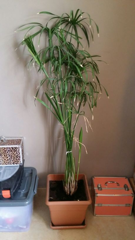 Home plant for sale