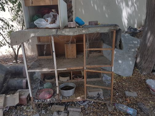 king pigeons and family for sale 16pcs
