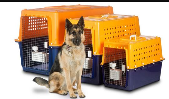 need dog cage the biggest size