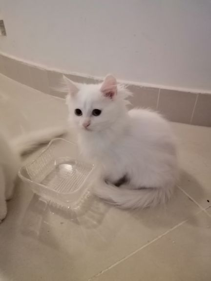 very cute and smart kittens