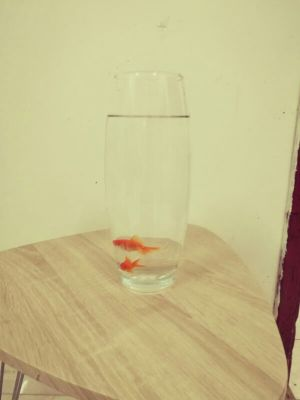 2 Goldfish & Long Vase
