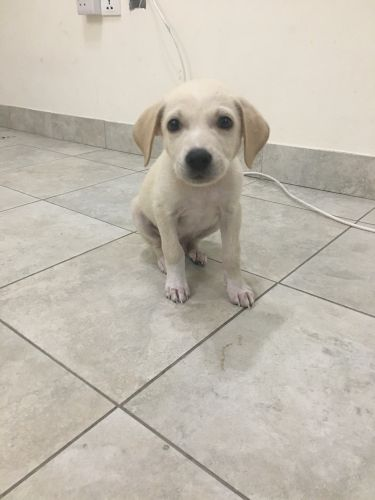 Trained Puppy for sale