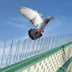 birds pest control services