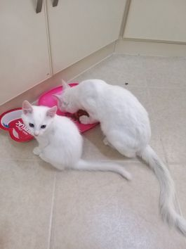 A mother cat & kittens for adaption