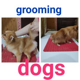 grooming dogs , cats