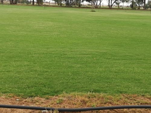 natural grass for sale
