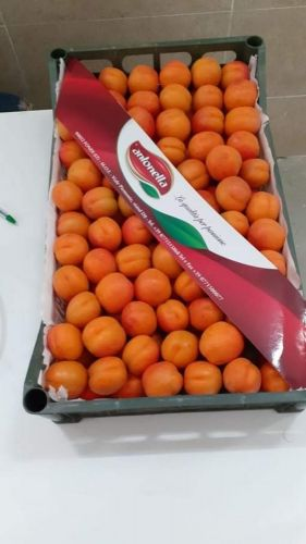 Food Product for export
