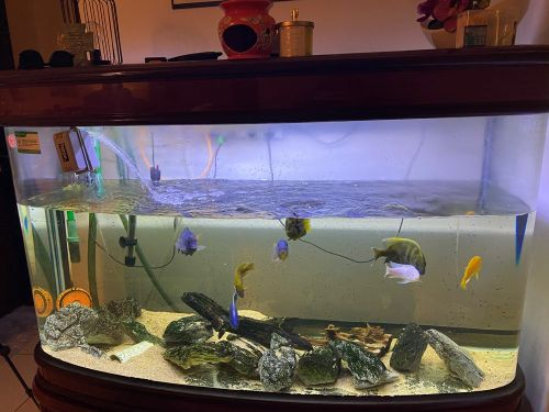 Lovely Aquarium & Fishes For Sale