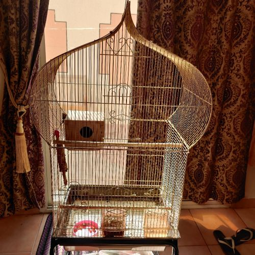 golden cage  for birds new