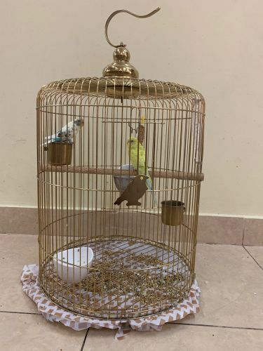 a pair of birds with cage & stand
