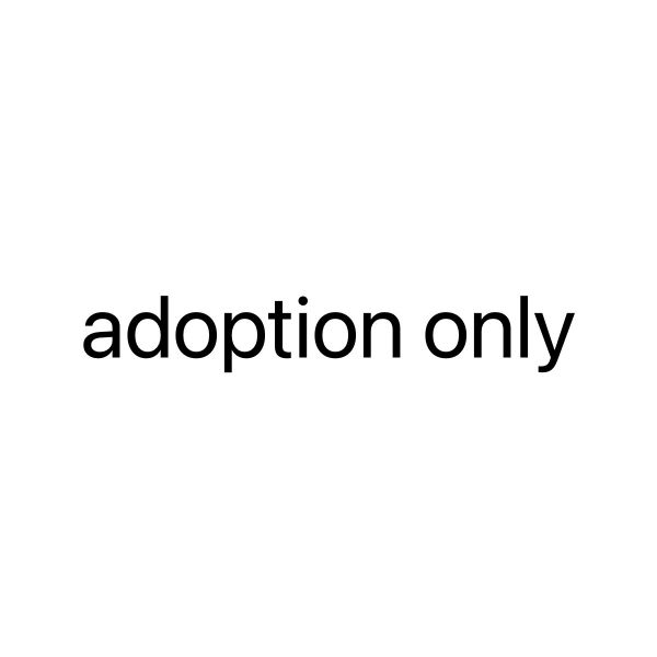 I need a kitten for adoption